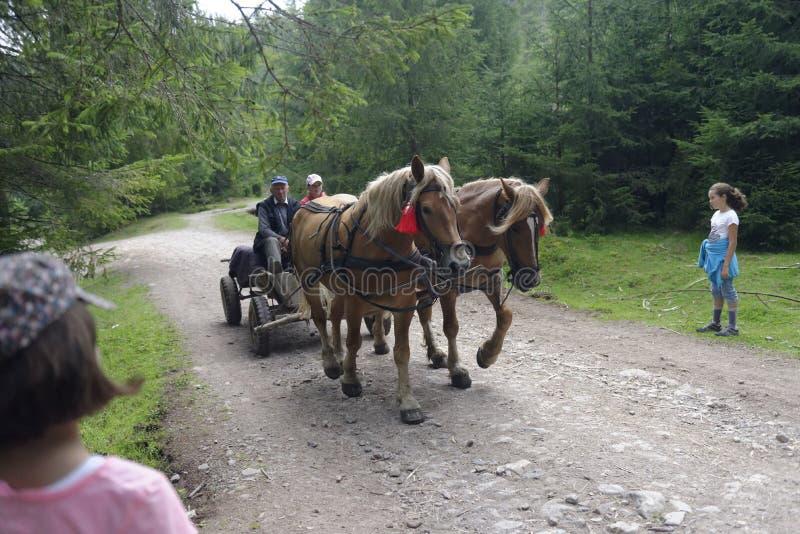 Transporte puxado a cavalo, montanhas de Apuseni, Romênia imagens de stock