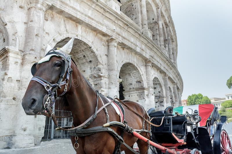 Transporte puxado a cavalo ou botticella no italiano na rua de Roma na frente de Colosseum antigo fotos de stock