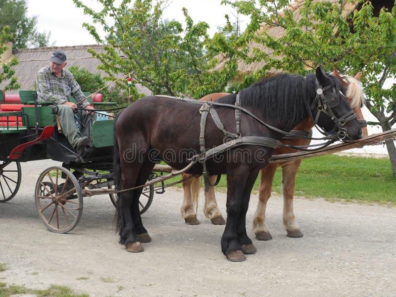 Transporte retro com os dois cavalos fortes foto de stock
