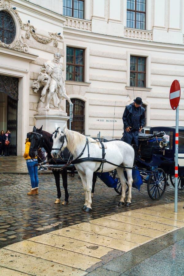 Transportes tradicionais com os cavalos que esperam turistas, Viena, imagens de stock