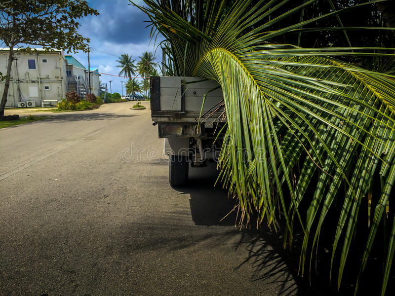 Transporting Coconut Leaves royalty free stock photography