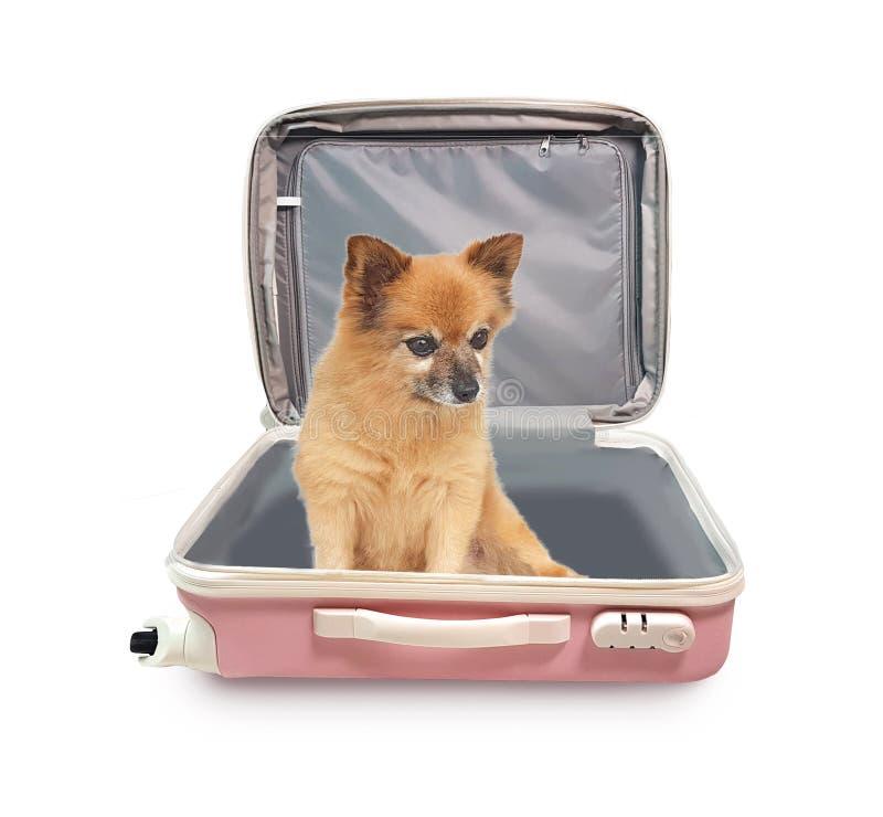 Transports animaux de vacances de vacances de voyage images stock