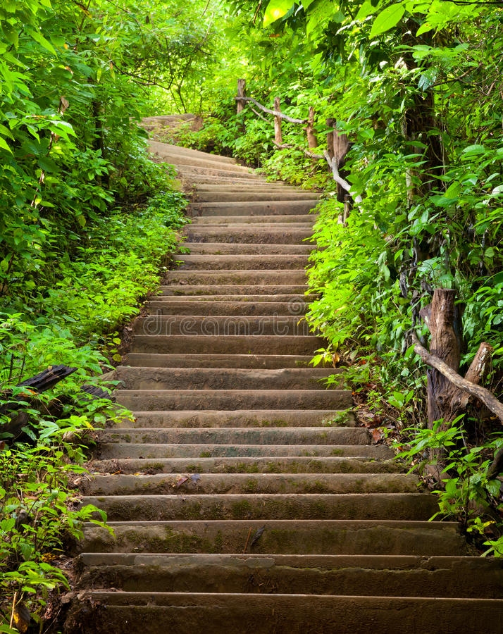 Trap aan bos royalty-vrije stock afbeelding