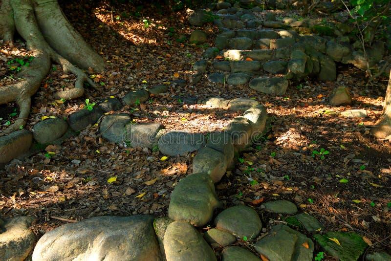 Trap door bos stock afbeeldingen