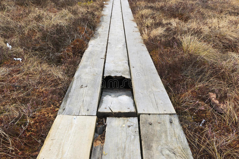 Trap. The path into the swamp in the broken boards stock images