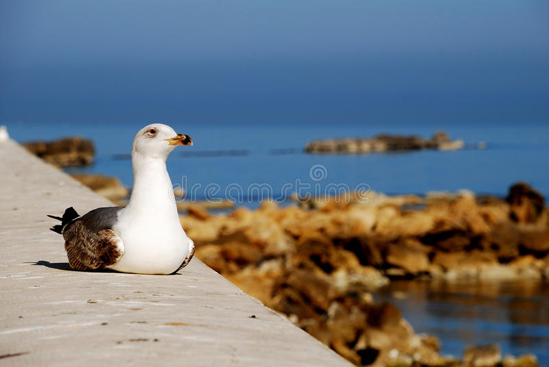 Download Trapani - seagull stock image. Image of fortitude, beach - 24164515