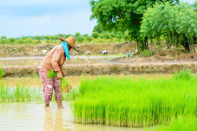 Trapianto dell'agricoltore fotografia stock libera da diritti