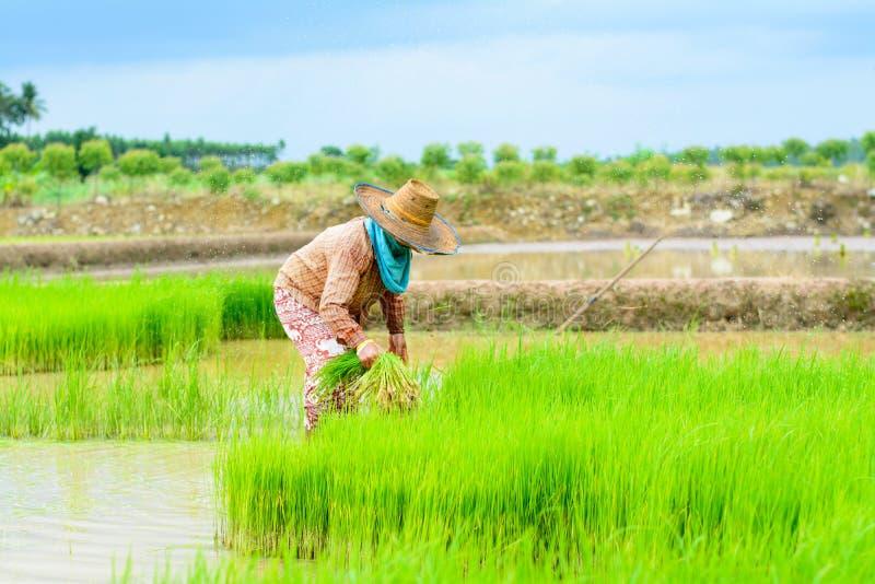 Trapianto dell'agricoltore immagini stock libere da diritti