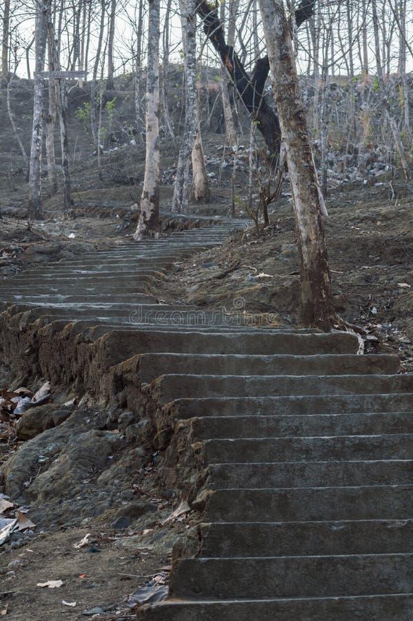 trappa i den kusliga skogen royaltyfri fotografi