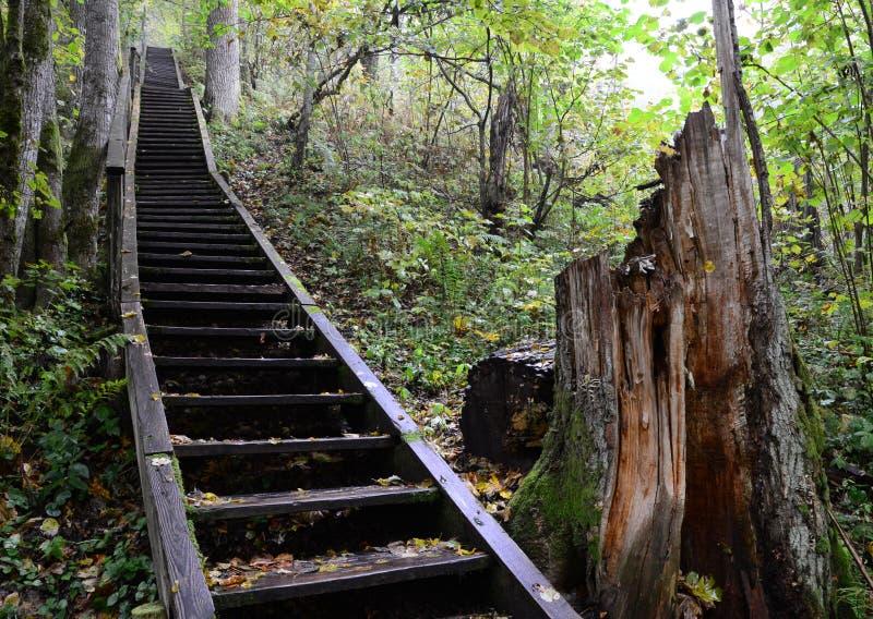 Trappa i skogen fotografering för bildbyråer