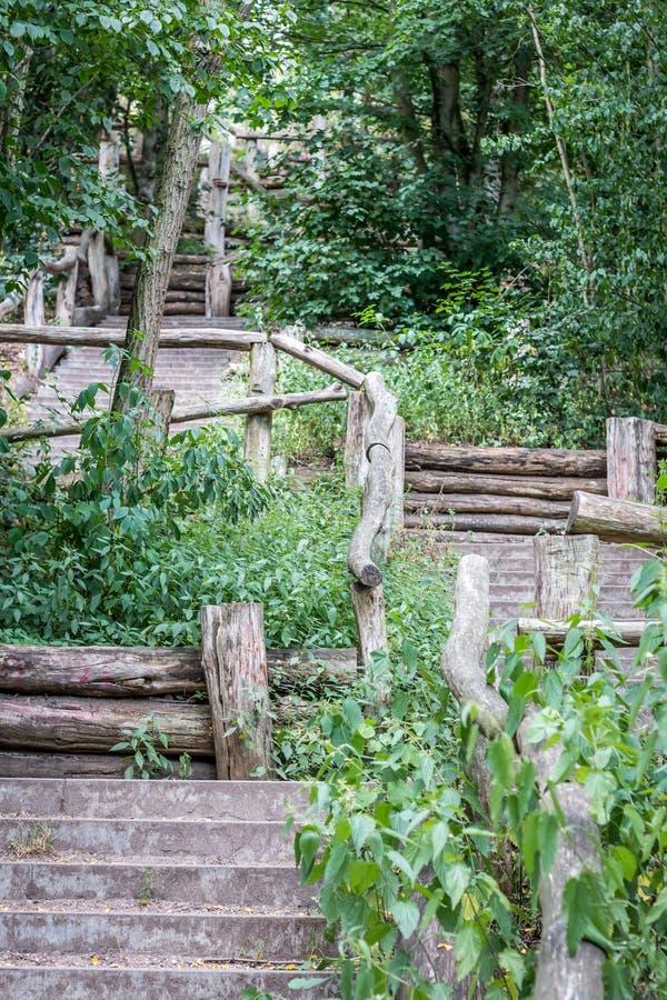 Trappa i skogen arkivbilder