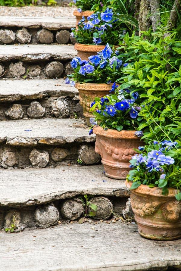 Trappa och blomkrukor royaltyfri foto