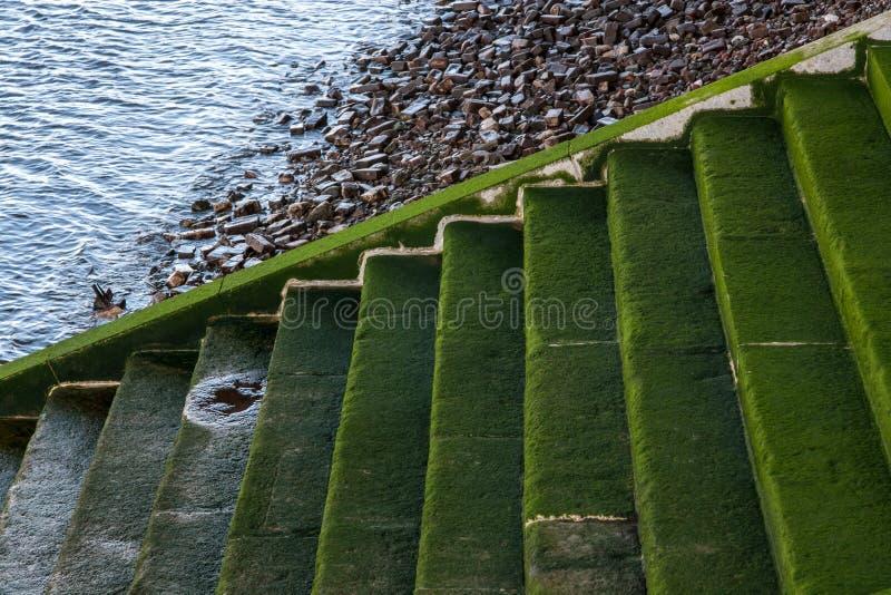 Trappa som är grön från alger som leder till flodThemsen i London royaltyfri fotografi