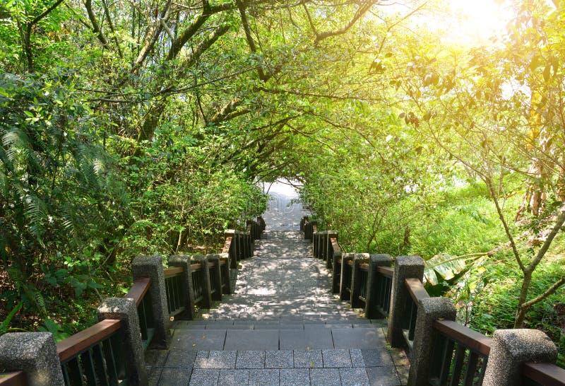 Trappa som går ner i en tropisk skog med solljus arkivbild