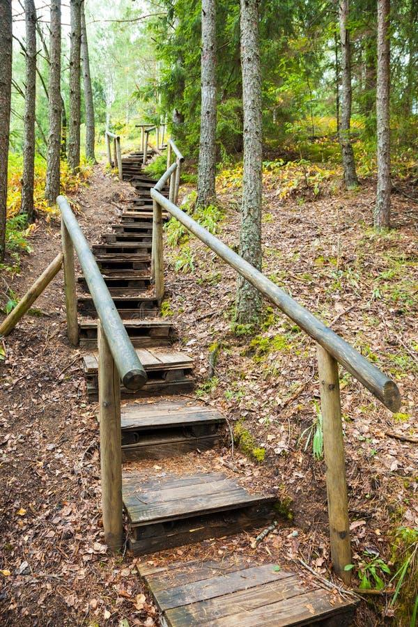 Trappa till bergskogen, naturslinga i reserv royaltyfri foto