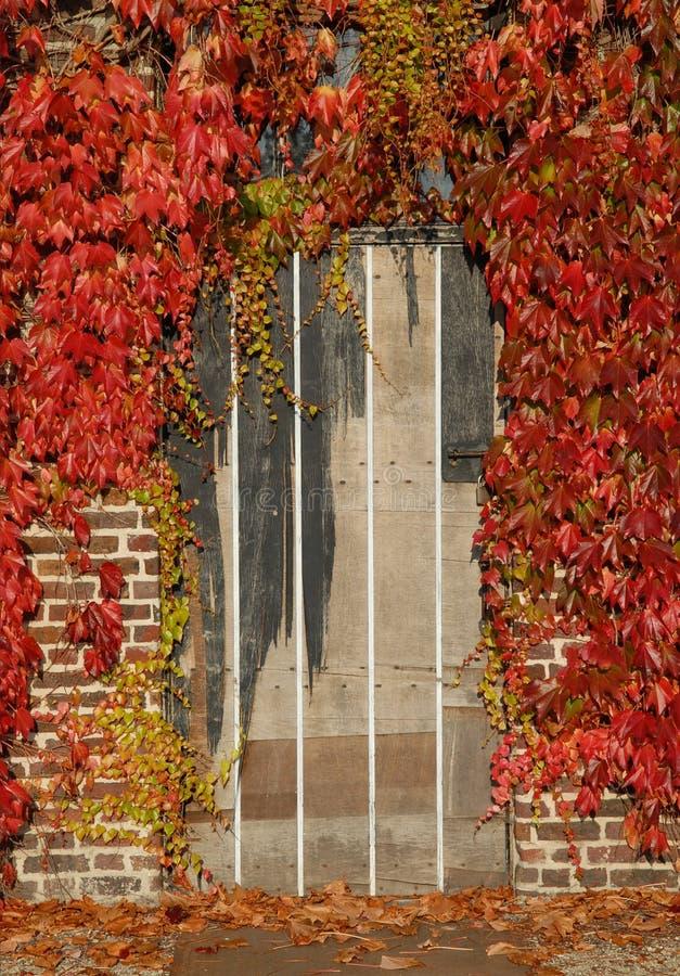 Trappe avec des lames d'automne images libres de droits