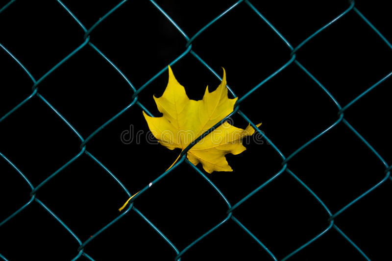 Trapped leaf stock image