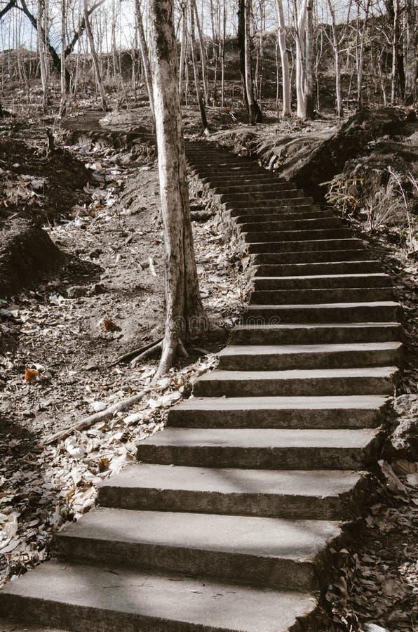 Trappuppgång som leder till den övre kullen utöver de döda träden royaltyfri foto