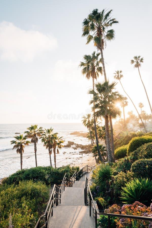 Trappuppgången och palmträd på Heisler parkerar, i Laguna Beach, det orange länet, Kalifornien royaltyfri foto