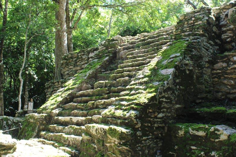 Trappuppgången på ett forntida Mayan fördärvar i Quintana Roo, Mexico royaltyfri bild