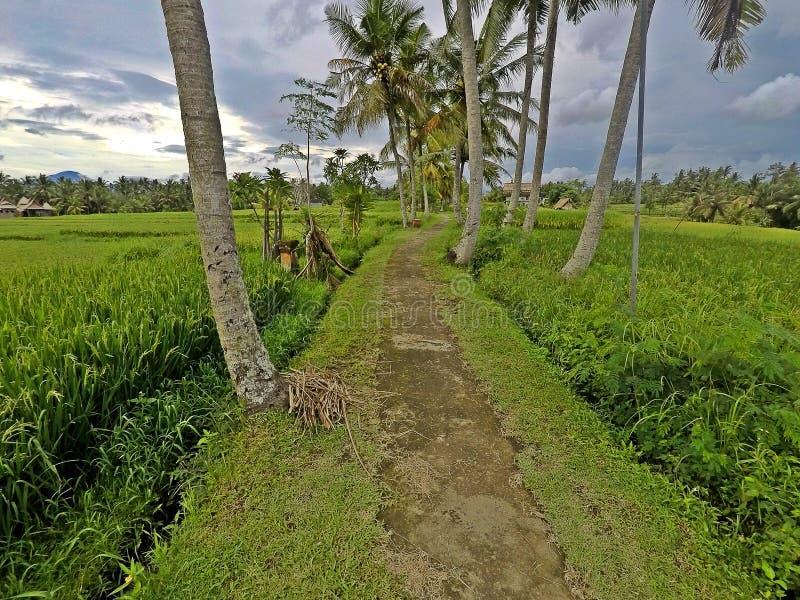 Trasa Rice taras w Ubud, Bali zdjęcia stock