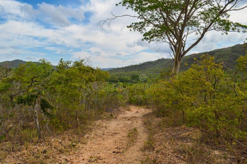 Trascini attraverso le montagne in un parco di stato nel Brasile immagine stock libera da diritti