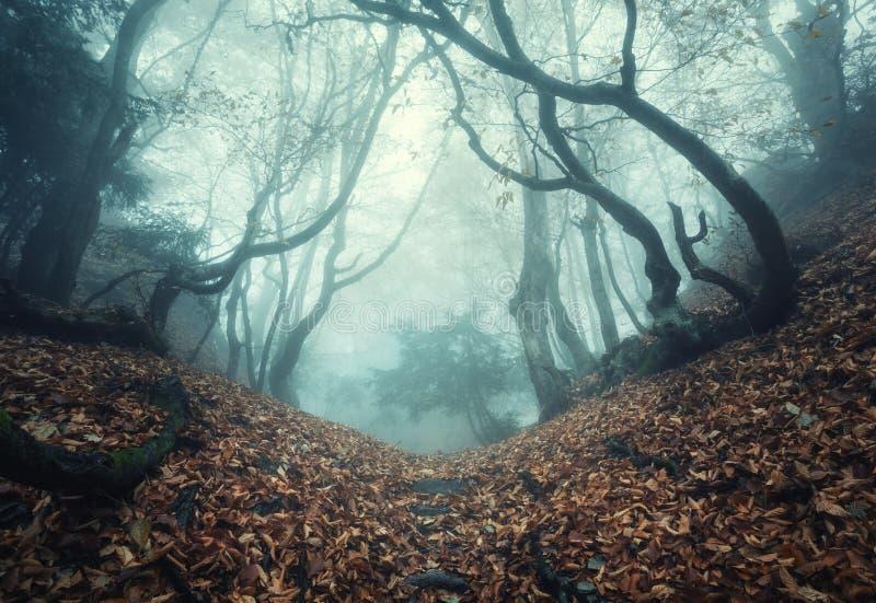 Trascini attraverso una vecchia foresta scura misteriosa in nebbia Autunno immagine stock