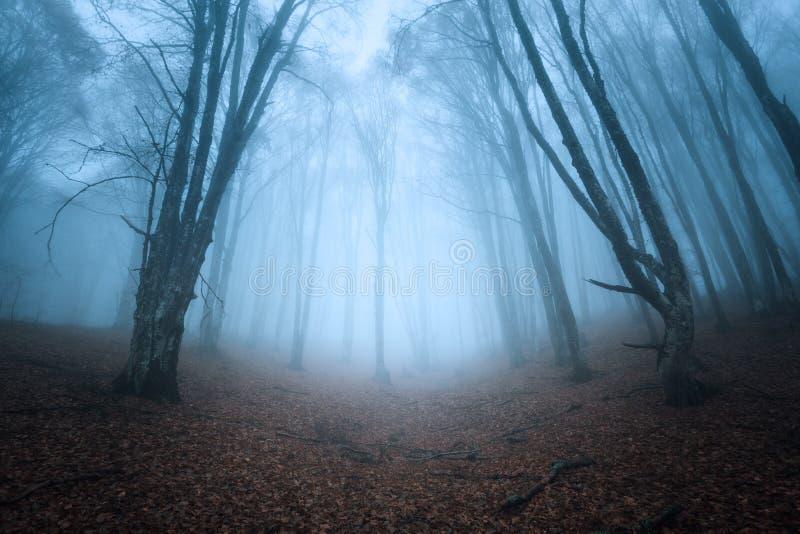 Trascini attraverso una vecchia foresta scura misteriosa in nebbia Autunno immagini stock libere da diritti