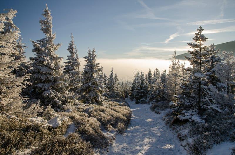 Trascini in foresta 1, l'orario invernale, le montagne giganti, repubblica Ceca fotografie stock libere da diritti