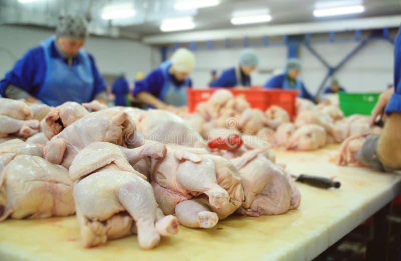 Trasformare pollame nell'industria alimentare pollo fotografie stock