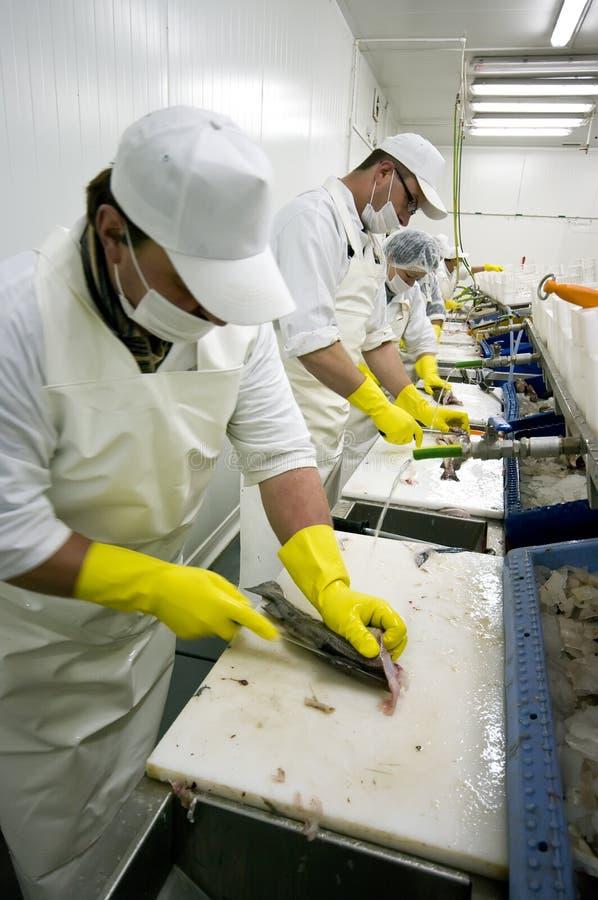 Trasformazione dei prodotti alimentari fotografia stock libera da diritti