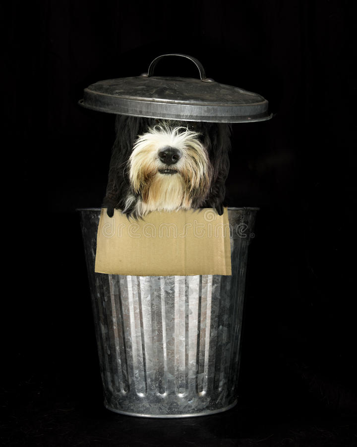 Trash dog royalty free stock photos