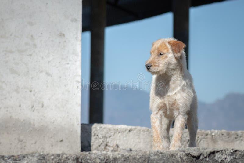Trasigt och hungrigt anseende för gullig vit hund på trappan med himmel och mountainon royaltyfria bilder