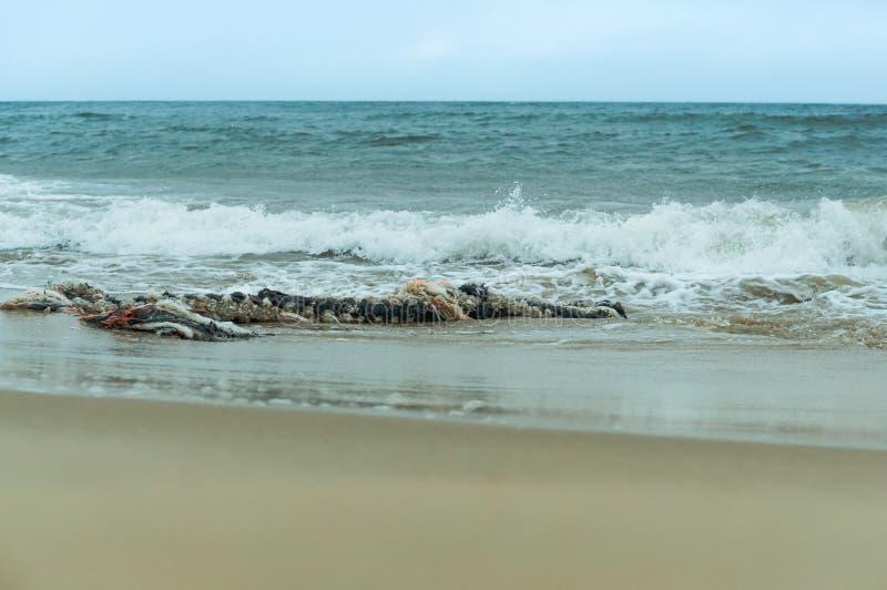 Trasigt tjockt rep, gammalt rep i havet fotografering för bildbyråer