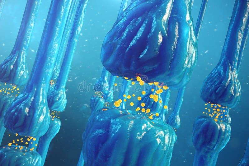 Trasmissione sinaptica, sistema nervoso umano Sinapsi del cervello Sinapsi della trasmissione, segnali, impulsi nel cervello illustrazione di stock