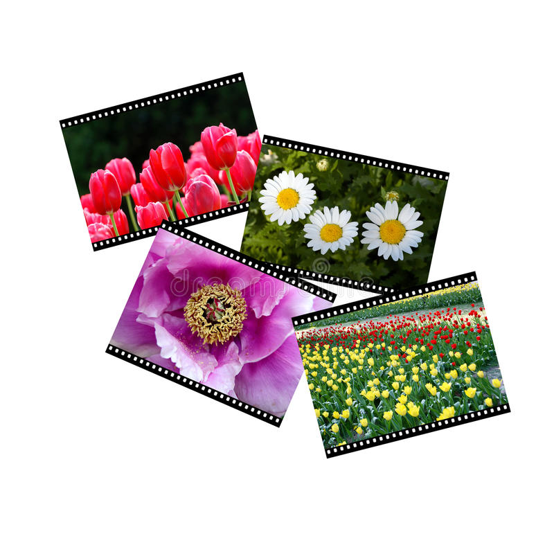 Trasparenze di pellicola fotografie stock
