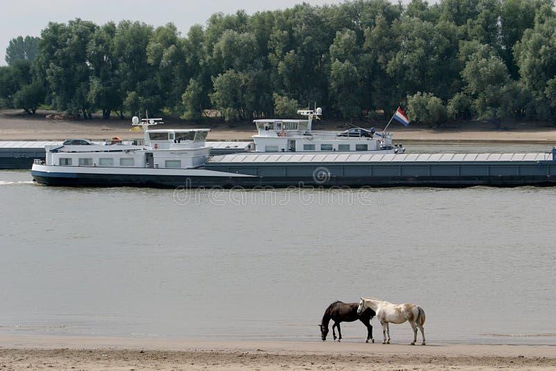 Trasportare-vendi su un fiume olandese fotografie stock