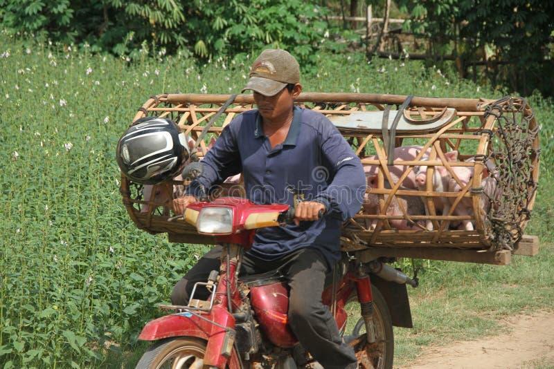 Trasportatore cambogiano immagini stock libere da diritti