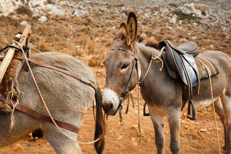 Trasporto alla spiaggia Balos immagine stock libera da diritti