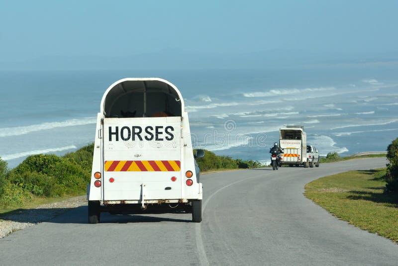 Trasporto del cavallo durante le feste immagine stock libera da diritti