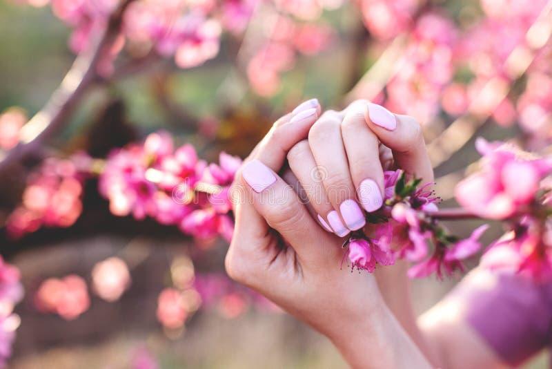 Tratamento de mãos cor-de-rosa com flores do pêssego fotos de stock royalty free
