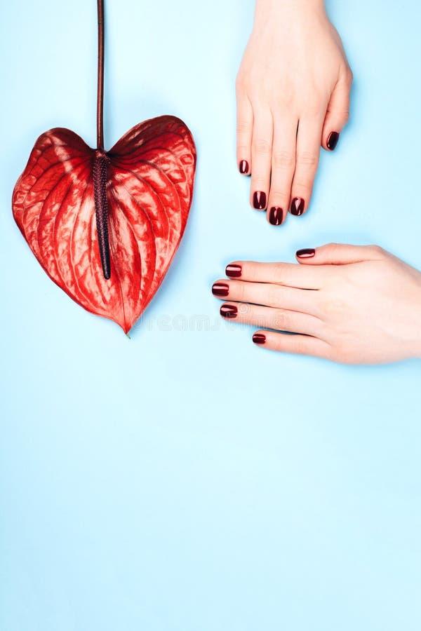 Tratamento de mãos e flor vermelhos imagens de stock