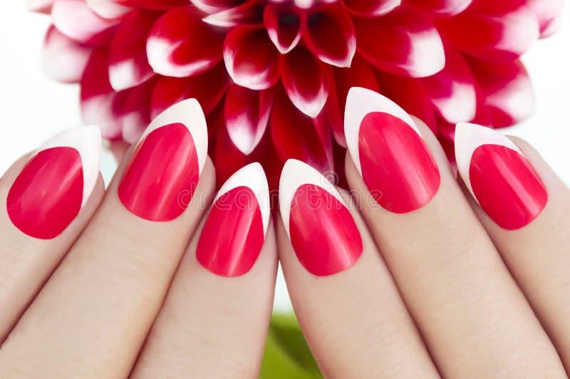 Tratamento de mãos francês vermelho com dálias fotografia de stock