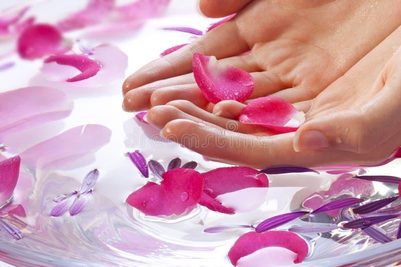 Tratamiento de la belleza de la flor de las manos imagen de archivo