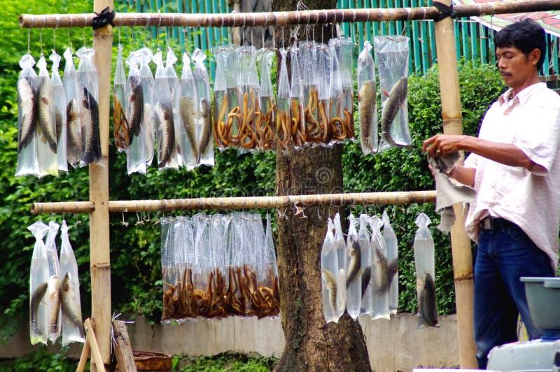 Tratante de pescados, Indonesia fotografía de archivo libre de regalías
