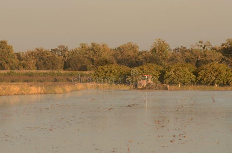 Trator da inundação fotografia de stock