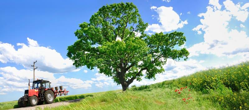 Trator de cultivo e árvore verde grande imagem de stock royalty free