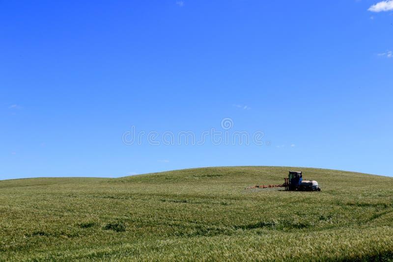 Trator de cultivo que ara e que pulveriza no campo de trigo foto de stock royalty free