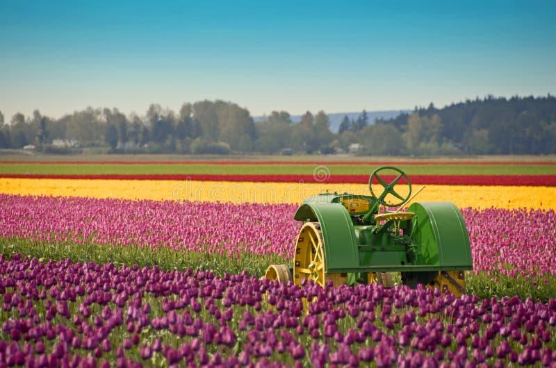 Trator de exploração agrícola do Tulip foto de stock