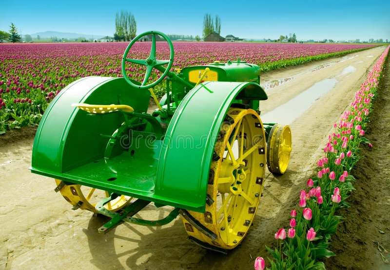 Trator de exploração agrícola do Tulip fotografia de stock